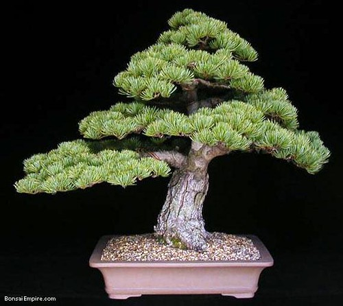 top-bonsai-gallery-l-64