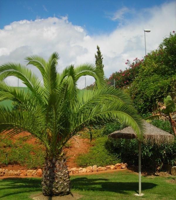 Palm Tree & Umbrella Creating Shade - Sharing