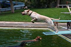 5 Springtime Safety Tips For Your Pet: Dog days