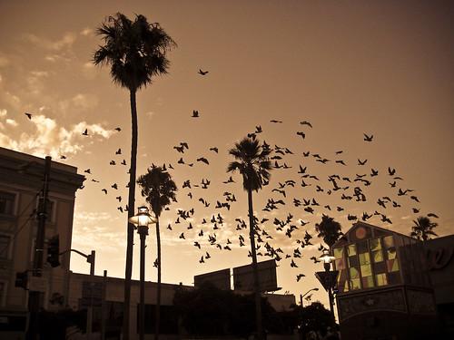 Birds At Evening