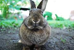 Rabbit ! / Kaninchen!