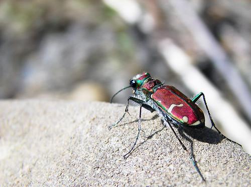 Predatory bugs