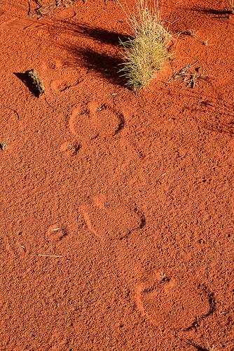 Kamelspuren im Sand