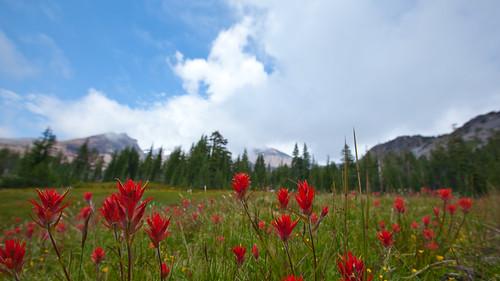 Mount Shasta - Panther Meadows