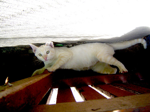 cat on the bottom
