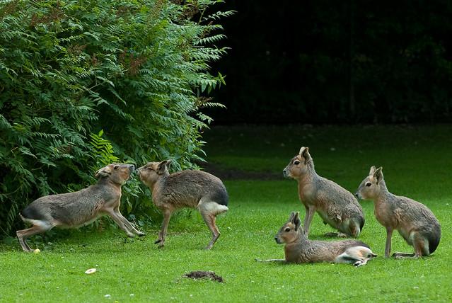 Fighting Bunnies