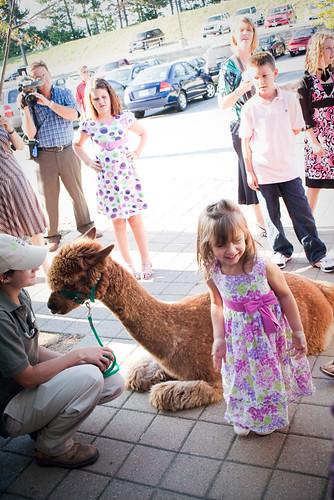 alpaca visitor