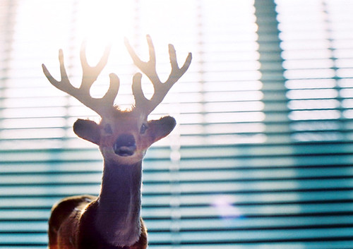 light deer