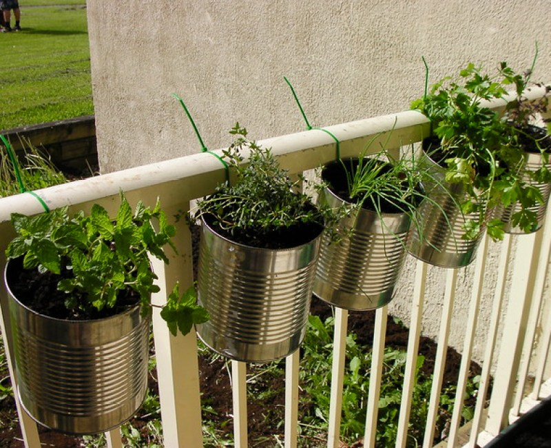 Herbs in coffee cans, hung with zip ties. I take no credit for this, it is all my husbands doing : )