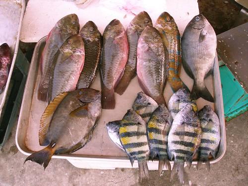 拍了再吃 菜市場蘊藏新魚種不容錯過 | 臺灣環境資訊協會-環境資訊中心