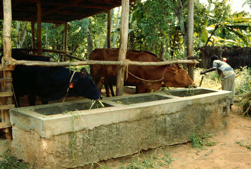 Evolution of Uganda's dairy systems