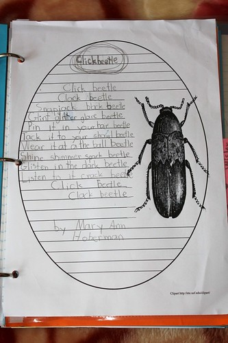 poetry notebooking Clickbeetle