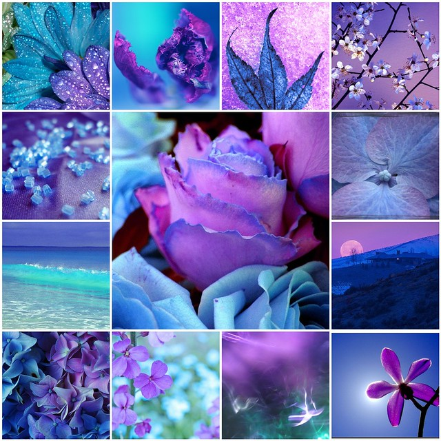 Lavender And Flowers Turquoise