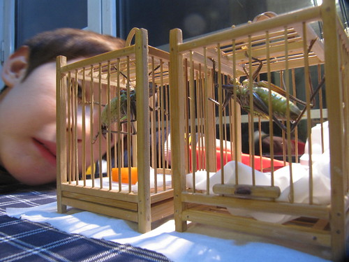 Pet Crickets, just hanging around