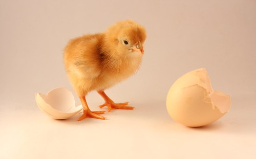 The Chicken & The Egg Dilemma