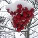 Frozen Red Berries