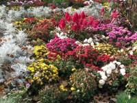 Late Autumn Flower Garden   Flickr - Photo Sharing!