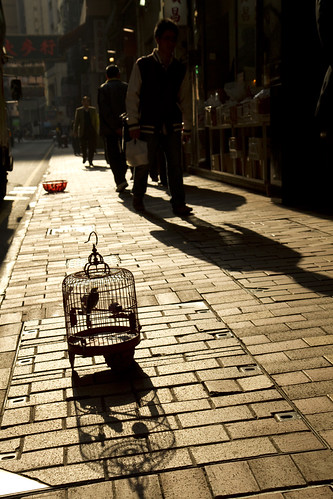 Bird cage in the morning sun
