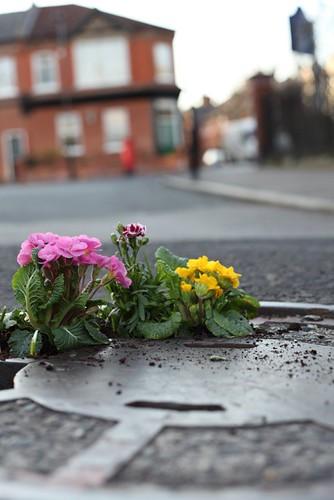Pothole garden 3