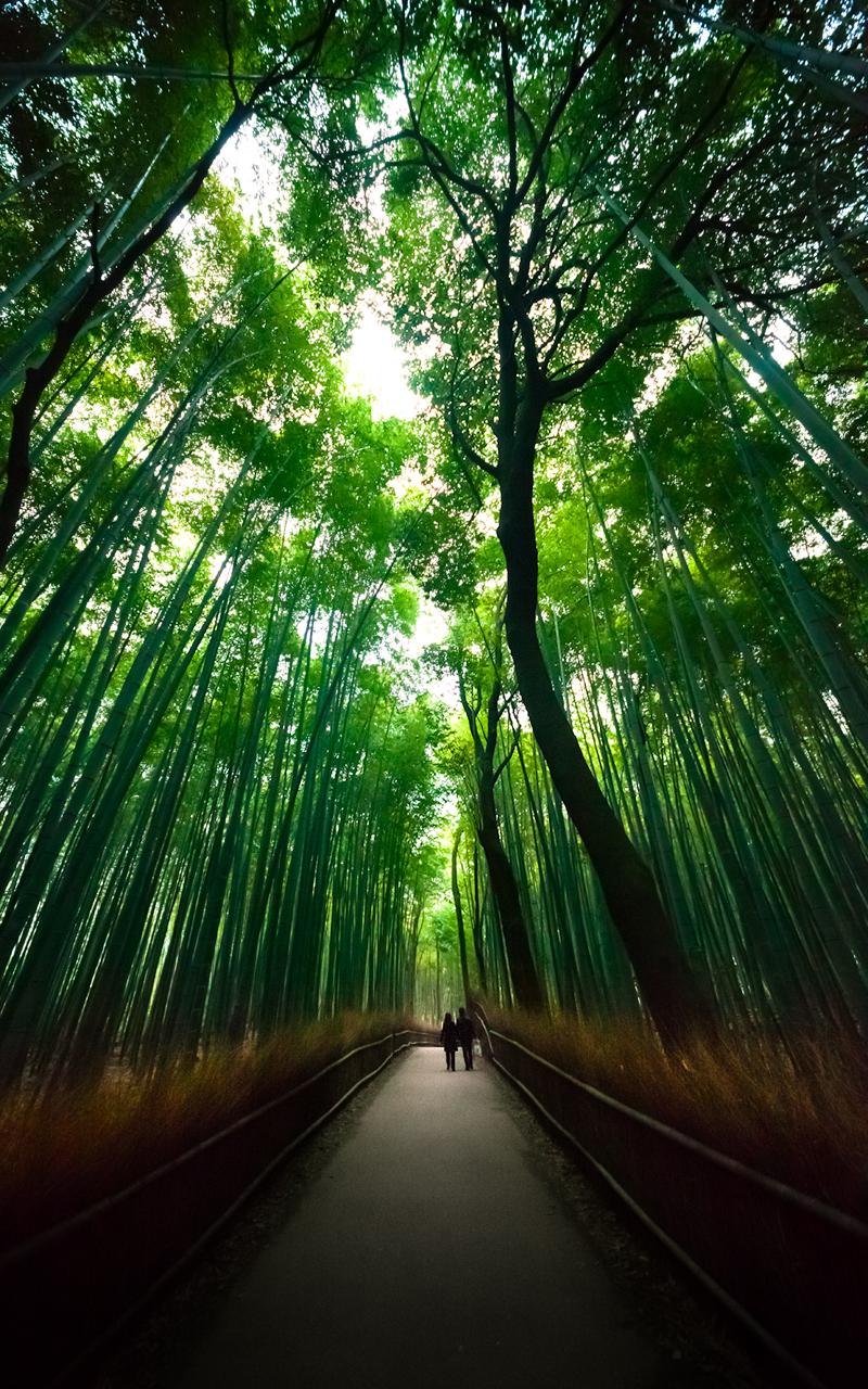 Sagano bamboo forest : Arashiyama, Kyoto, Japan / Japón
