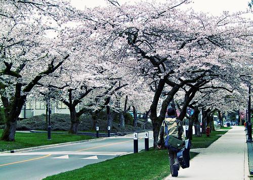 风.花.树
