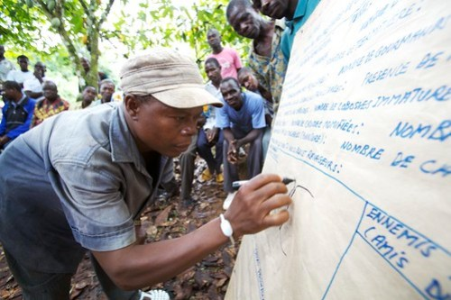 Farmer field schools supported by Nestlé train farmers to improve their cocoa harvest