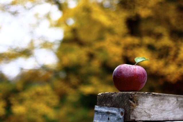 Apple picking and raking: falling for fall!