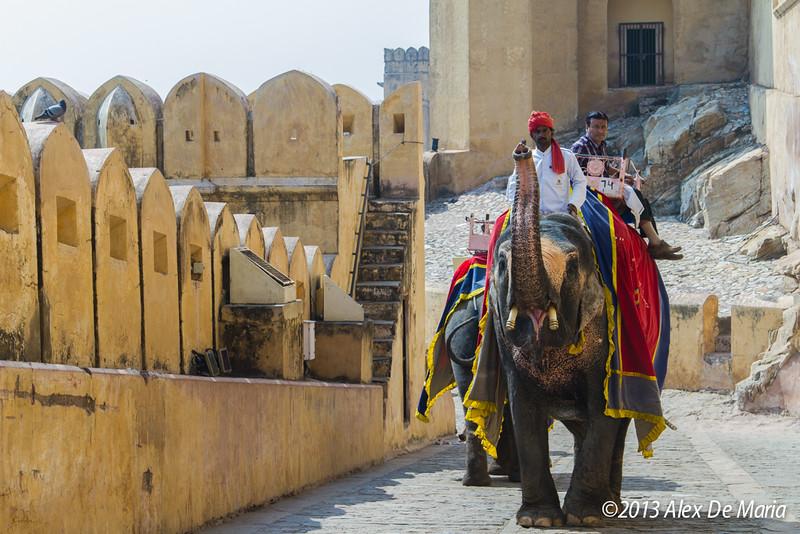 Jaipur, Rajasthan - 2013