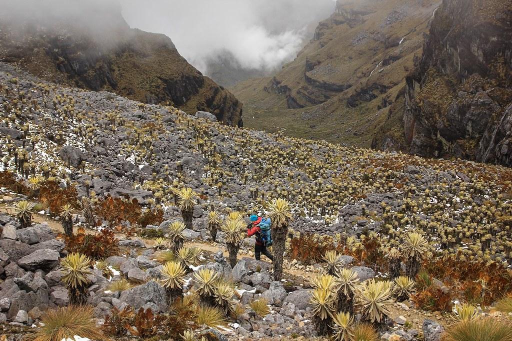 Fog crawls in from the Amazon. Frailejónes shape the fairytale scenery. PNN El Cocuy. Colombia.