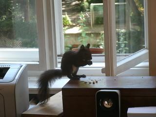 Eichhörnchen 7