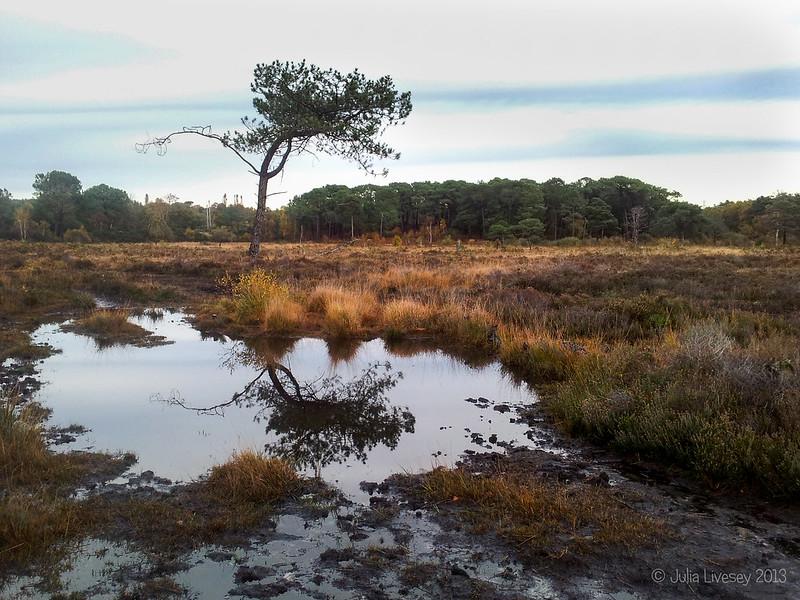 Reflected Tree