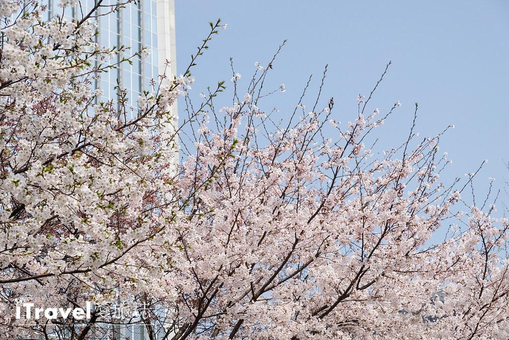 《首尔赏樱景点》石村湖:乐天世界塔旁环湖樱花绽放,2017年首尔新地标赏樱首选。