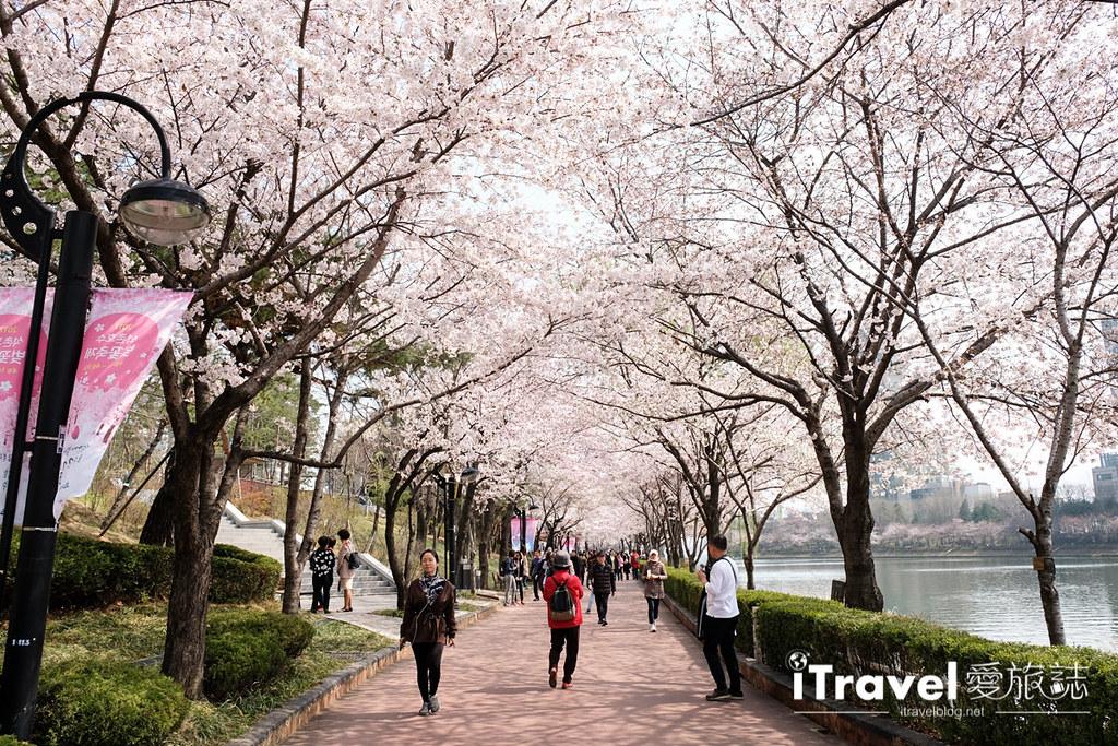 首尔赏樱景点 乐天塔石村湖 (14)