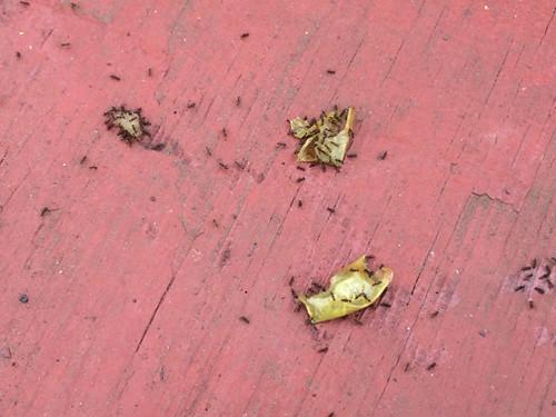 ants on unknown weird stuff
