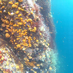 Viajefilos en el Leon Dormido, Galapagos 004
