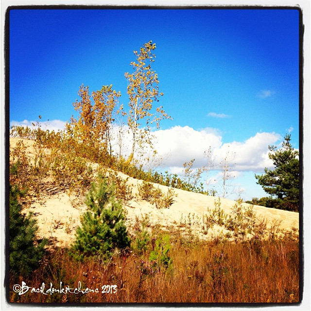 Oct 14 - favorite space {Prince Edward County; which I call home!} #fmsphotoaday #home #princeedwardcounty #sandbanks #dunes #autumn #fall