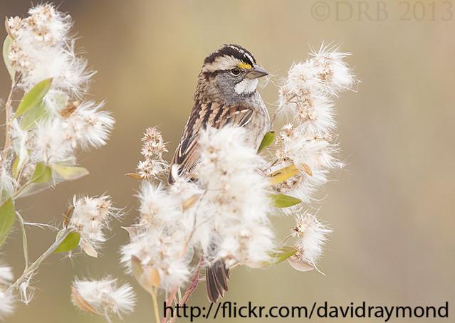 NJ Bird photo