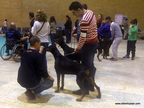 Expo canina Sevilla 2013 (8)