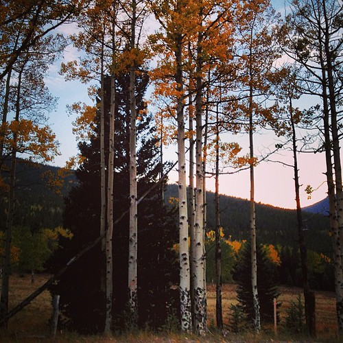 Aspens near Idaho Springs #colorado by @MySoDotCom