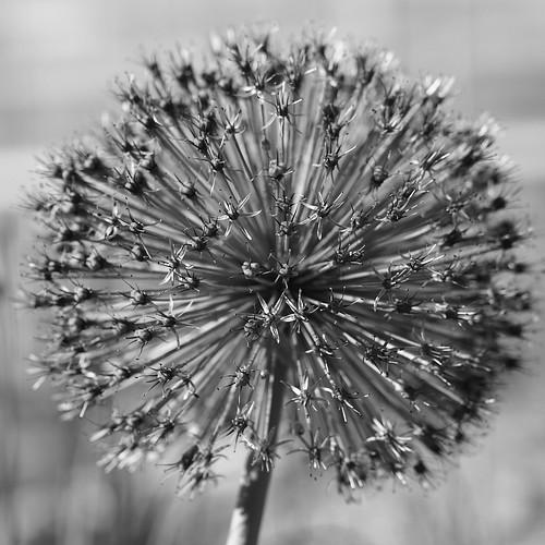 Week 21/52 - Spherical by Flubie