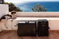 Bewachte Koffer