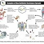 CDC_antibiotic_resistance_pathways