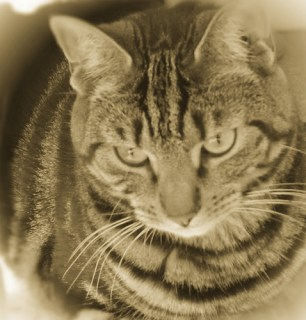 cat photo in vintage style