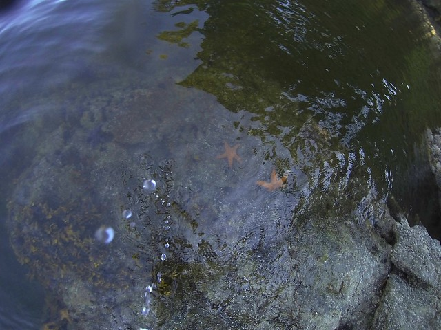 Water Droplets and Starfish