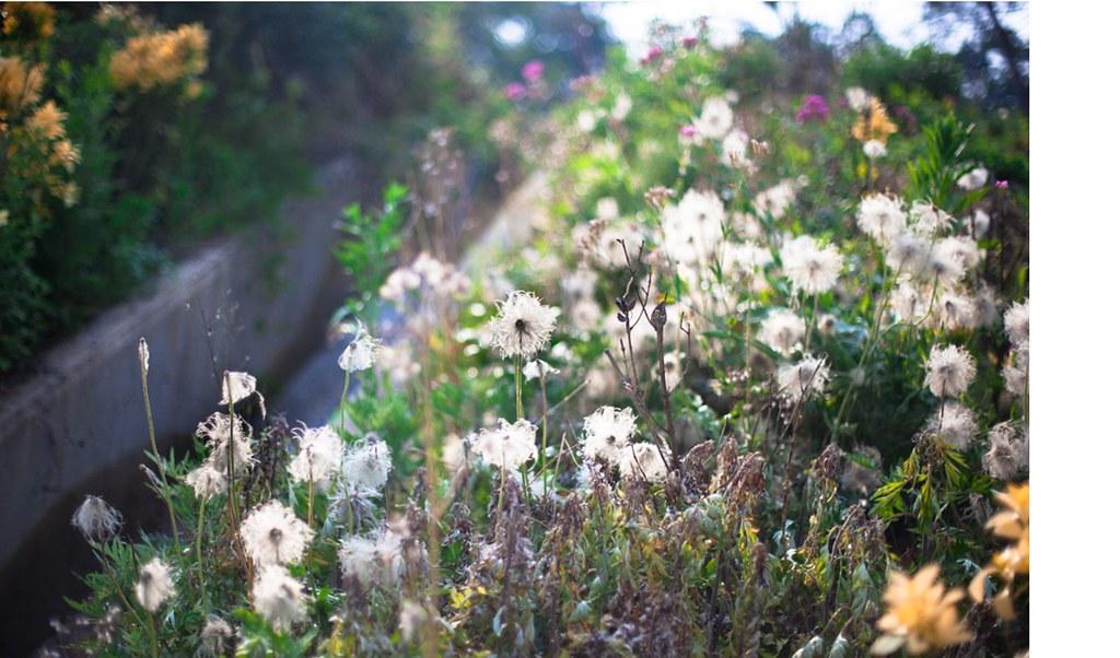 Webs of seeds