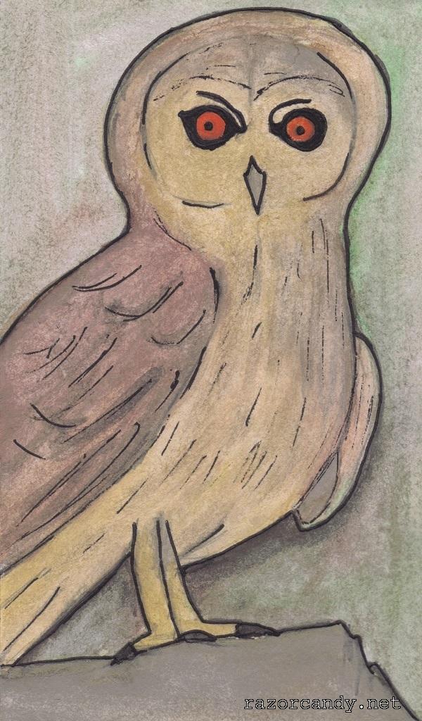 04-10-2013 Omani Owl