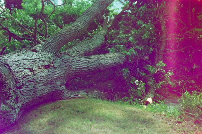Found film - tree down