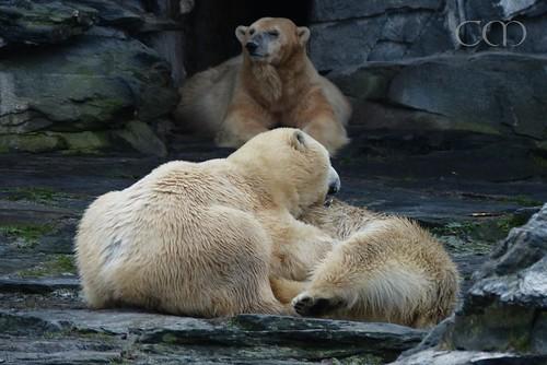 Aika resting, Tonja and Wolodja wrestling! :)))
