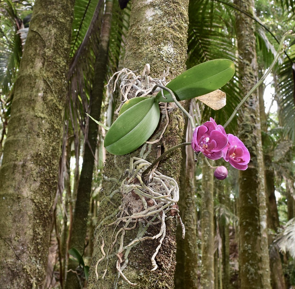 Orchids Attached To Palm Tree Trunks Throughout The Gard
