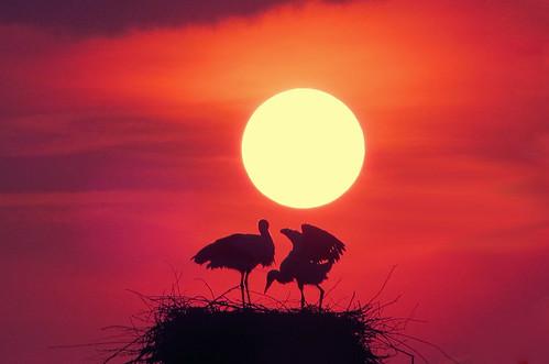 IMG_1076 Sunset storks - ON EXPLORE #73